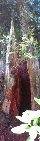 Backyard Stump 2 Carving