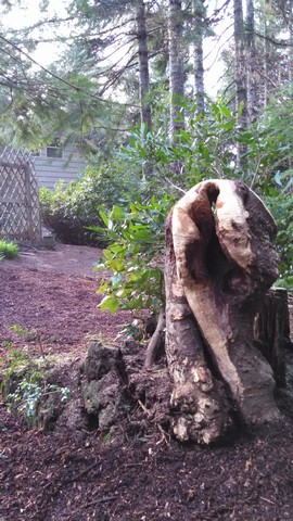 Backyard Stump Carving