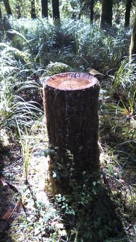 Birdbath Stump2